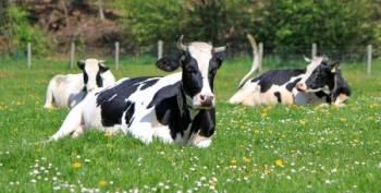 Dairy Farming in Ireland