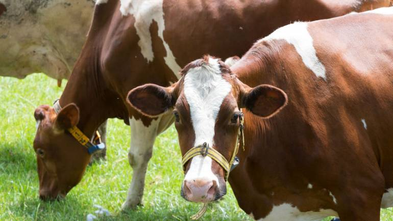 BSE discovered on Scottish farm